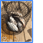 crappie catch