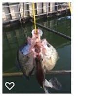 fishing crappie tips