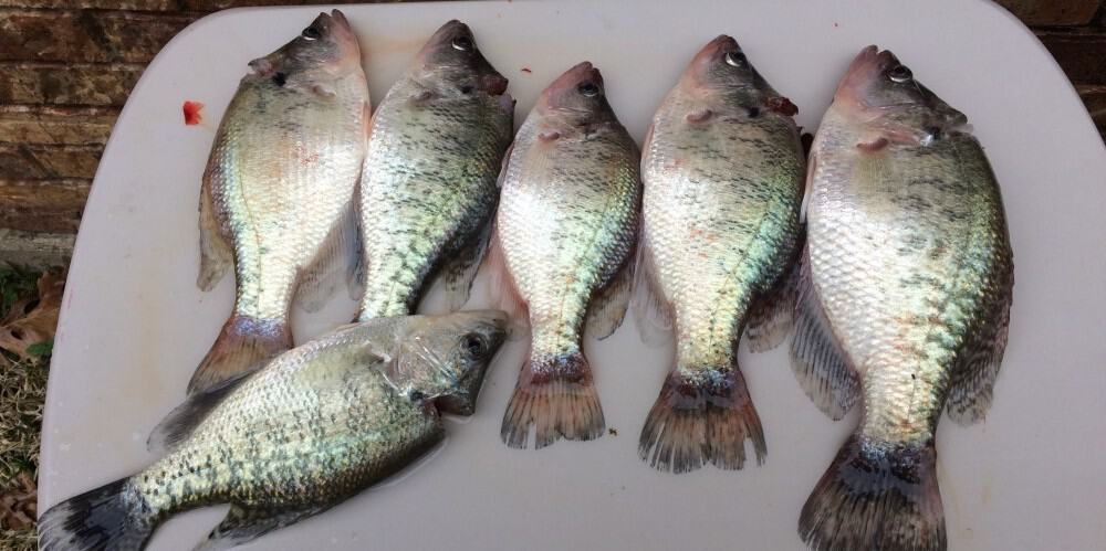clean crappie